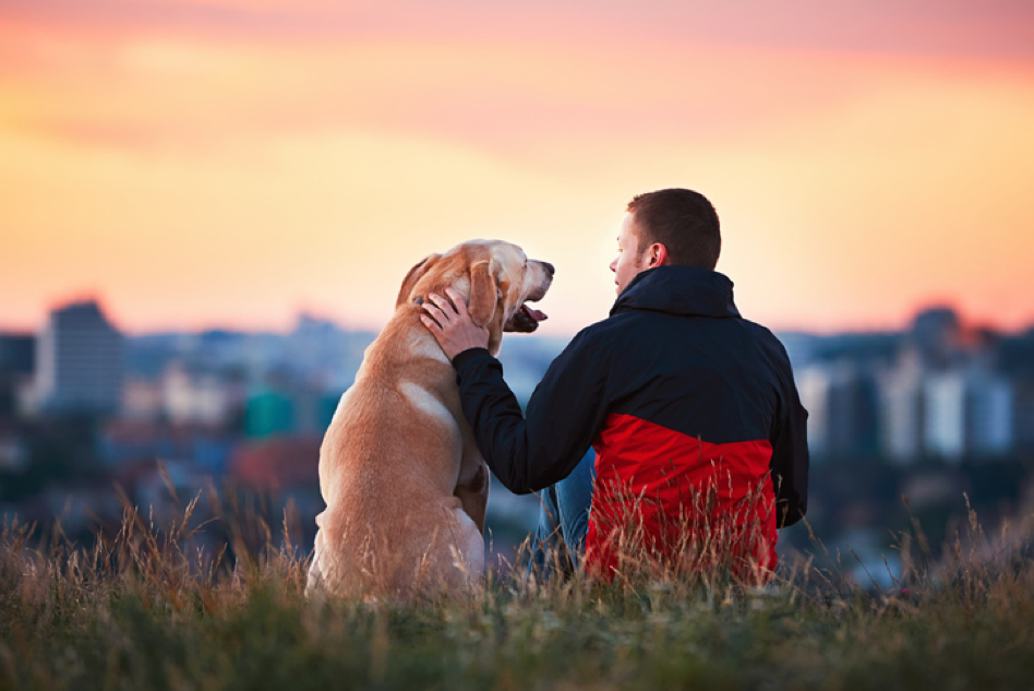 How to Pick the Right Veterinarian for Your Pet